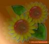 sample_735.jpg